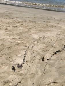 砂浜のアゲハ2